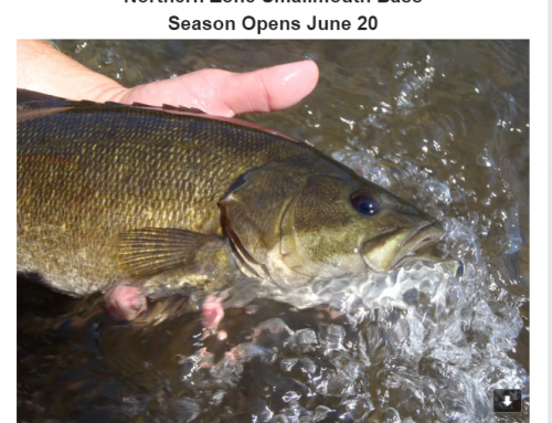 Smallmouth Bass Opens June 20th, 2020